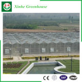 Листа PC пяди земледелия дом Multi зеленая для засаживать