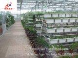 China-Hersteller-Gewächshaus im Fabrik-Preis und in der guten Qualität