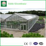 Large Size multi-splinter Design Commercial PC Greenhouse