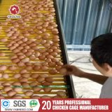 Las últimas jaulas de la gallina del pollo de la capa del equipo de la granja avícola del diseño