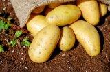 2018 neues Getreide gestampfte Kartoffelflocke-Nahrung
