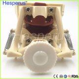 Modèle mou dentaire de dents de gomme avec Tougne Typodont avec 32 dents amovibles Nissin 200 Hesperuscompatible