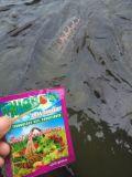 [أونيغروو] تغذية مادة لأنّ [أقوكلتثر] /Fish يتوالد