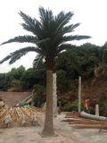 Piante e fiori artificiali della palma da datteri Gu-Hs-Date-Palm008