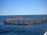 水産養殖の深海の入り口の漁網のケージを反振りなさい