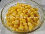Céréales de maïs sucré en conserve 2015 Autumn Season