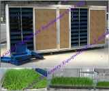 Alimentação animal China Grass Barley Growing Seed Sprouting Machine