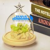 星の上デザインガラスガラス鐘の陸生動物飼育器のドームのCloche
