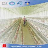 Gaiola automática da galinha do pássaro do equipamento das aves domésticas para o Henhouse da casa de galinha