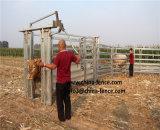 販売のための頑丈な熱いすくいの電流を通された牛ヤードのクラッシュ