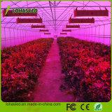 600W-1800W完全なスペクトルの穂軸LEDは野菜花の温室植物のために軽く育つ