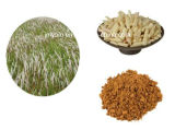 지혈성 고품질 소파 잔디 추출 또는 Arundoin 의 10:1 20:1