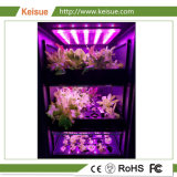 Azienda agricola verticale idroponica di Keisue LED crescente