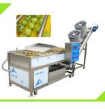 Rondella della frutta di automazione e linea di produzione di secchezza di lavaggio di verdure dell'essiccatore