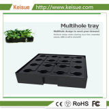Fazenda Vertical Keisue Cofre Bandeja crescente de produtos hortícolas