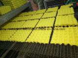 ورقيّة بيضة صيغية آلة لب بيضة علبة آلة