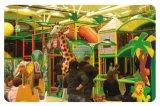 Спортивная площадка джунглей занятности Cheer опирающийся на определённую тему крытая