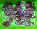 Punti di cristallo rossi di Nautral