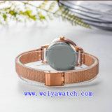 Relojes del acero inoxidable del OEM del reloj (WY-17035B)