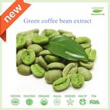 Karosserien-dünner grüner Kaffeebohne-Auszug