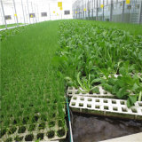 Hydroponic 온실 시스템을%s 가진 Venlo 유리제 온실 농업 온실