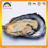 De Tablet en de Capsule van het Uittreksel van het Vlees van de oester