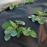 Barrière non-tissée de pp Spunbond Weed