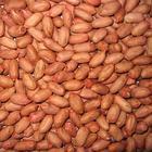 Sementes vermelhas novas do amendoim da pele da qualidade superior da colheita