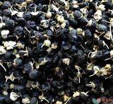 黒いGojiの果実のQinghaiの起源2017の収穫