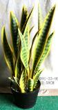 اصطناعيّة معمل وزهرات من [سنسفيريا] أصفر حافة