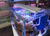 acquario di 40cm 54W White+Blue LED per acqua dolce