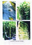 Qualsiasi verdura usata con il bio- fertilizzante organico di Unigrow