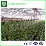 Estufa agricultural do policarbonato com respiradouro do motor