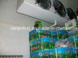 Quarto frio modular /a armazenagem a frio para carne, peixe, vegetais e frutas
