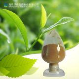 Catechins 1% 98% do pó EGCG do extrato do chá verde