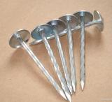 De gegalvaniseerde Spijker van het Dakwerk van de Steel van de Paraplu Hoofd Verdraaide