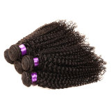 Dos pacotes Curly Kinky malaios malaios do cabelo do Virgin do cabelo 3PCS do Virgin da classe 8A Weave malaio não processado do cabelo humano de cabelo Curly