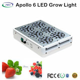 180W Apollo 6 LED Grow Light para plantação de estufa