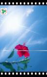 Vetro solare libero Tempered del comitato fotovoltaico solare basso del ferro