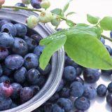 음식과 음료를 위한 25%Anthocyanins 월귤나무속 추출