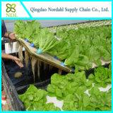 Sistema Growing del hidrocultivo de la granja con el invernadero gótico comercial del túnel y del Multi-Palmo