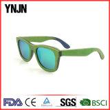 Sunglass de madeira verde colorido Ynjn (YJ-MP180)