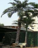 La vendita calda ha simulato gli alberi di noce di cocco curvi
