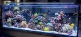 Tischplattenglasaquarium-Fisch-Installationssatz