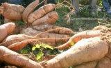 Удобрение калия 45% аминокислота органическое
