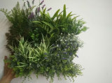 Plantas decorativas de la hierba del colgante de pared del marco