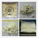Занимаясь культуризмом пересылка CAS 10161-33-8 enanthate trenbolone стероидов дополнения безопасная