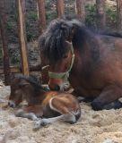 北アメリカのための馬の肥料の振動クリーニングのツールの販売