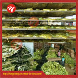 Introducción abreviada de secadora del alimento de la legumbre de fruta