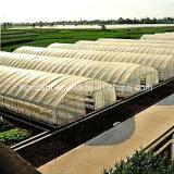 Película de plástico de venda quente das emissões para o plantio de vegetais